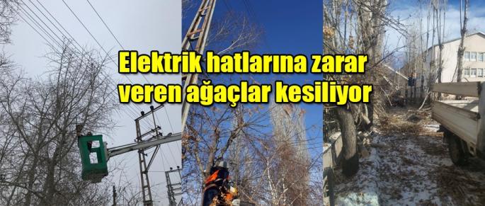 Belediye zararlı ağaçları kesiyor