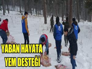ARDAHAN'DA YABAN HAYATA YEM DESTEĞİ