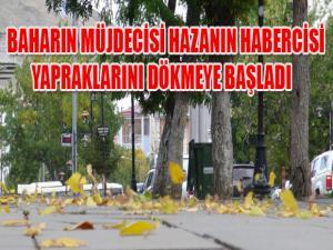 BAHARIN MÜJDECİSİ HAZANIN HABERCİSİ