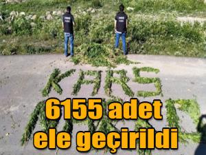 KARS'TA 6155 ADET ELE GEÇİRİLDİ