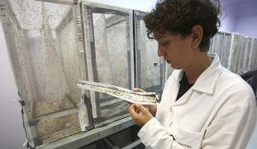Zika virüsüne karşı ortak mücadele çağrısı