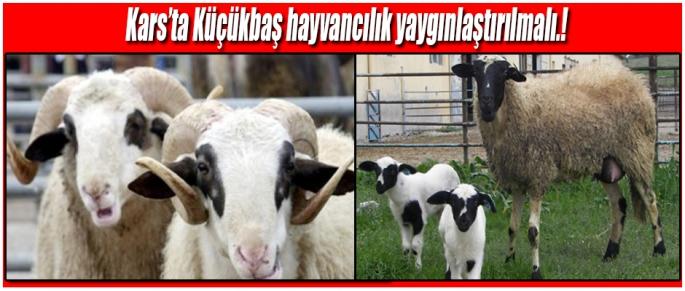 Kars'ta Küçkükbaş Hayvancılık Desteklenmeli