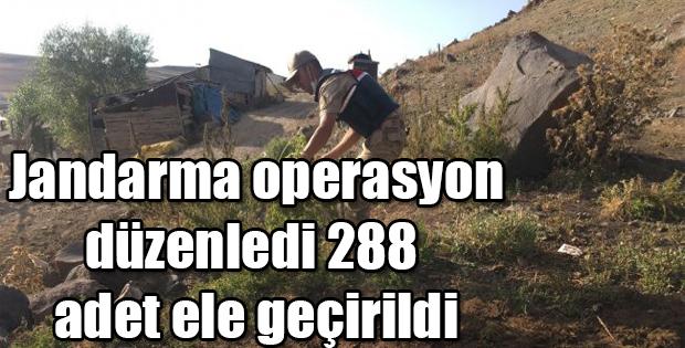 JANDARMA OPERASYON DÜZENLEDİ 288 ADET ELE GEÇİRİLDİ